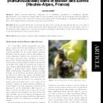 Observations de Bombus gerstaeckeri Morawitz (Hymenoptera, Apidae) butinant Dephinium dubium (Rouy et Fouc.) Pawl. (Ranunculaceae) dans le Massif des Ecrins (Hautes-Alpes, France)
