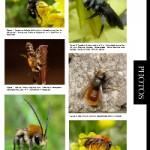 Kaléidoscope des photos prises par les membres du groupe Apoidea-Gallica (1)