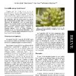Ceylalictus variegatus Olivier (Hymenoptera, Halictidae), espèce nouvelle pour l'Aquitaine (France)