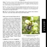 Bourdons rares du Parc Naturel Régional du Queyras (Hautes Alpes, France)