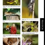 Kaléidoscope des photos prises par les membres du groupe Apoidea-Gallica (2)