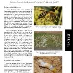 Mise à jour de la distribution géographique de l'abeille du lierre, Colletes hederae Schmidt & Westrich (Hymenoptera, Colletidae) en Europe
