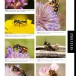 Kaléidoscope des photos prises par les membres du groupe Apoidea-Gallica (3)