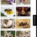 Kaléidoscope des photos prises par les membres du groupe Apoidea-Gallica (4)