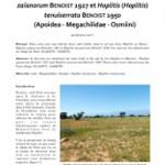 Note sur la nidification dans le sol de deux Hoplitis du Maroc : Hoplitis (Anthocopa) zaïanorum BENOIST 1927 et Hoplitis (Hoplitis) tenuisserata BENOIST 1950 (Apoidea – Megachilidae – Osmiini)
