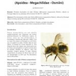 Description du mâle d'Osmia (Helicosmia) nasoproducta FERTON 1909 (Apoidea – Megachilidae – Osmiini)