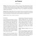 Hoplitis lithodorae MÜLLER 2012 (Apoidea – Megachilidae – Osmiini) en France