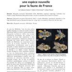 Dasypoda morawitzi RADCHENKO 2016 (Apoidea – Melittidae – Dasypodaini), une espèce nouvelle pour la faune de France
