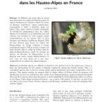 Présence de Bombus argillaceus SCOPOLI 1763 (Apoidea – Apidae – Bombini) dans les Hautes-Alpes en France